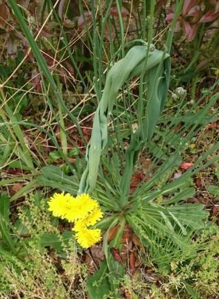 同じ花の茎の部分も写しました